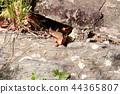 도마뱀, 한마리, 1마리 44365807