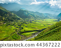 Rice terrace in Sapa Vietnam 44367222