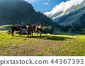 Countryside 44367393