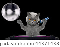 Cute cat singing with microphone a karaoke song in a night club -- isolated on black 44371438