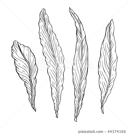 Types of leaf. Outline leaves of different types 44374168