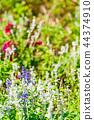 꽃밭, 플라워, 꽃 44374910