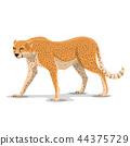 cheetah animal wild 44375729