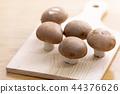브라운 버섯 44376626