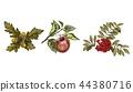 apple, rowan, fruits 44380716