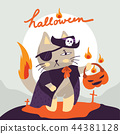 Isolated cat wearing pirate costume for Halloween 44381128