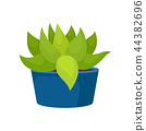 Flat vector icon of cactus with green leaves in blue ceramic pot. Succulent plant. Natural home 44382696