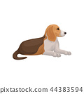 Beagle dog lying isolated on white background. Domestic animal with short hair. Flat vector for 44383594