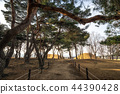 gyerim pine tree forest 44390428