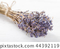 flower lavender isolated 44392119