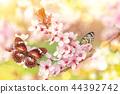 spring blossom flower 44392742