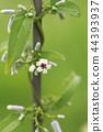 매크로 렌즈로 찍은 계요등 꽃 44393937