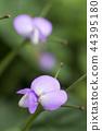 팥, 꽃, 플라워 44395180