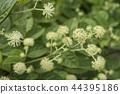 산채, 산나물, 식물 44395186
