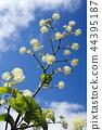 산채, 산나물, 식물 44395187