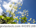 산채, 산나물, 식물 44395188