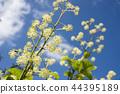 산채, 산나물, 식물 44395189