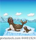 Vector illustration of Seal family cartoon on ice  44401924