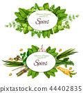 Natural herbal spices and herbs 44402835