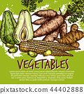 Exotic vegetables and edible roots, vector 44402888