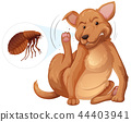 Dog itching flea concept 44403941