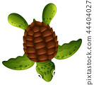 sea turtle background 44404027