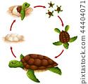 Turtle, reptile, life 44404071
