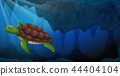 A green sea turtle underwater 44404104