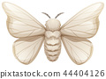 Silkworm on white background 44404126