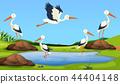 egret, heron, bird 44404148