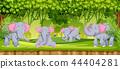 Elephants in the jungle scene 44404281