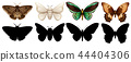 Different color and silhouette butterfly 44404306