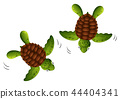 Two baby turtles white background 44404341
