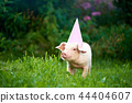 View of pink piggy standing in garden on green grass and looking at camera. 44404607