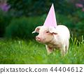 Portrait of cute little pink piggy standing in garden among green grass. 44404612