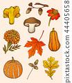 Set of mushrooms, flowers and leaves. 44405658