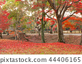 逗人喜爱的鹿和美丽的秋叶,奈良,日本 44406165