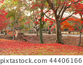 逗人喜爱的鹿和美丽的秋叶,奈良,日本 44406166