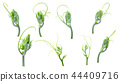 Green ivy plant  isolated on gray background, 44409716