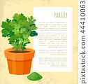 Parsley Poster and Text Sample Vector Illustration 44410063