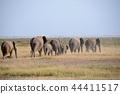 아프리카 코끼리, 코끼리, 행진 44411517