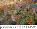 hakkoda mountains, maple, yellow leafe 44414595