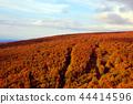 hakkoda mountains, maple, yellow leafe 44414596