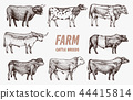 Farm cattle bulls and cows. Different breeds of domestic animals. Engraved hand drawn monochrome 44415814
