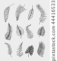 tropical or exotic leaves, leaf of different vintage looking plants. monstera and fern, palm with 44416533
