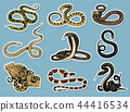 Set Viper Snake. serpent cobra and python, anaconda or viper, royal. engraved hand drawn in old 44416534