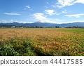 단풍하는 콩 밭 마츠모토시 섬 44417585
