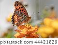 marbled fritillary, butterfly, butterflies 44421829