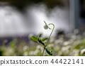 ดอกไม้,ฤดูใบไม้ร่วง,โคลเวอร์ 44422141