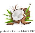 coconut coco tropical 44422197